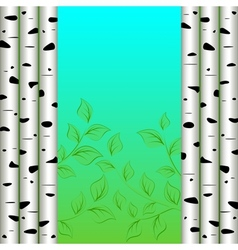 Birch background vector image