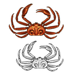 crab isolated seafood and fishery sketch icon vector image