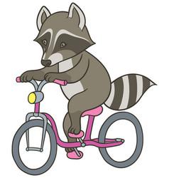 cute cartoon raccoon riding a bicycle vector image