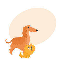 Cute funny dog characters - afghan hound and vector
