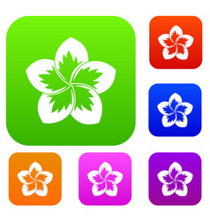 Frangipani flower set collection vector