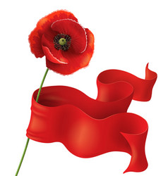 Poppy and ribbon vector