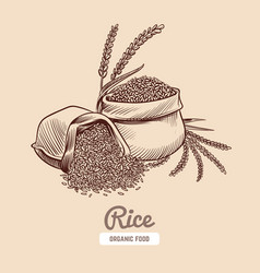 Rice background hand drawn bowl with rice grains vector