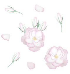 Set of realistic white roses petals and buds vector