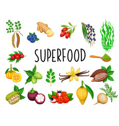 Superfood fruit and leafy greens vector