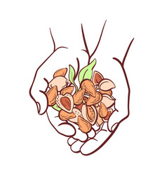 almond nut in hands top view vector image