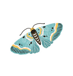 Hand drawn colored elegant flying moth gorgeous vector