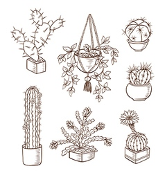 Set of various houseplants vector
