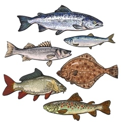 Colorful sea fish sketch style collection isolated vector image