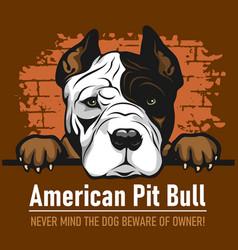 American pit bull - peeking dogs - breed face head vector