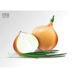 Fresh onion with green onion on a vector