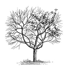 Ink sketch of dry tree vector