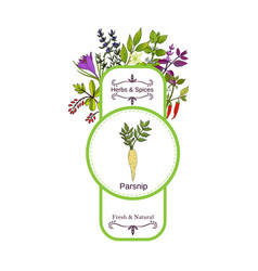 Vintage herbs and spices label collection parsnip vector