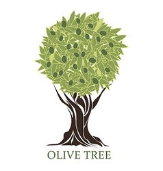 Logo olive tree with olives vector