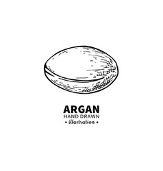 Argan drawing isolated vintage vector