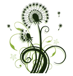 Dandelion tendril flowers vector image
