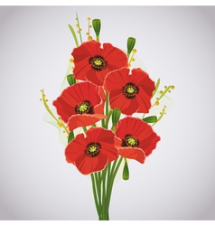 beautiful celebratory bouquet red poppies vector image