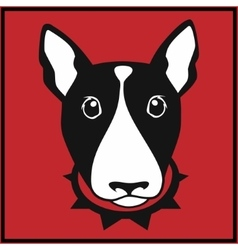bull terrier head vector image