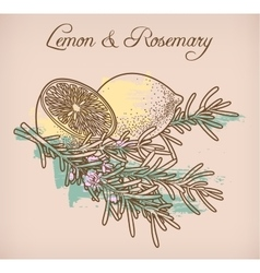 Lemon and rosemary vector