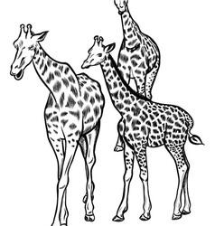 family giraffes vector image