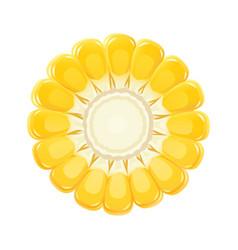Corn cob organic food vector