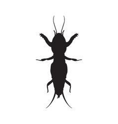 Gryllotalpidae silhouetteEuropean mole cricket vector