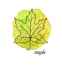 leaf of maple tree vector image