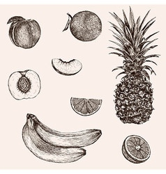 Sketch banana pineapple peach orange Hand drawn vector image