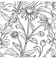arnica plant pattern on white background vector image