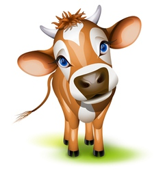 jersey cow vector image vector image