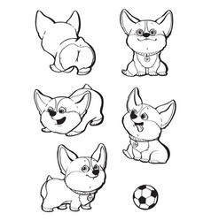 Cute dog breed welsh corgi collection set vector