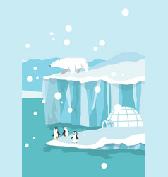 north pole arctic white bears and penguins on vector image