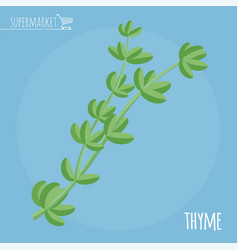 thyme flat design icon vector image