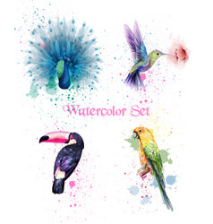 Watercolor birds set peacock parrot vector