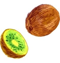 Watercolor fruit kiwi vector