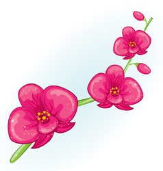 Pink prchid branch vector image vector image
