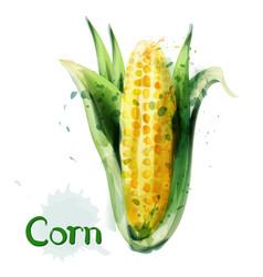 corn icon watercolor delicious maize vector image