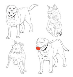 dogs of different breeds and cat vector image