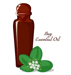Essential oil of Bay tree vector image