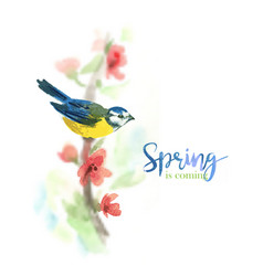 gentle watercolor background with titmouse vector image
