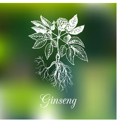ginseng on blurred background vector image