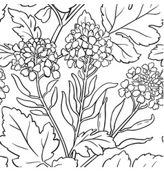 Mustard plant pattern on white background vector