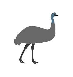 Ostrich emu vector