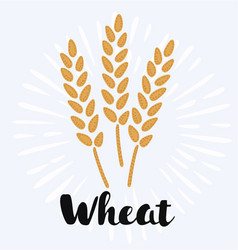 wheat and rye elements for design icon set vector image