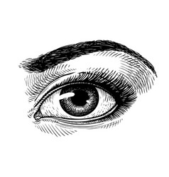 Hand-drawn beautiful female eye sketch makeup vector