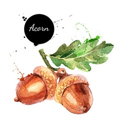 Hand drawn watercolor painting acorn isolated vector