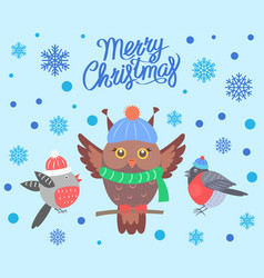 merry christmas with birds vector image
