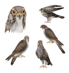 Set birds prey vector