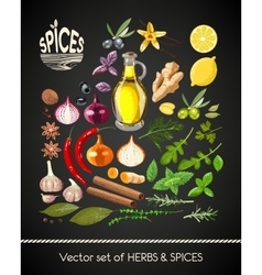 Set of spices vector