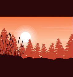 Silhouette of coarse grass and spruce forest vector